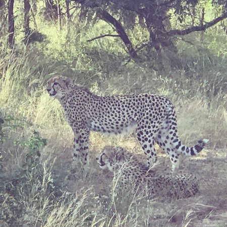 Phinda Private Game Reserve, South Africa: photo0.jpg