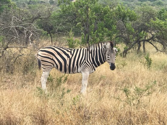 Phinda Private Game Reserve, South Africa: photo2.jpg