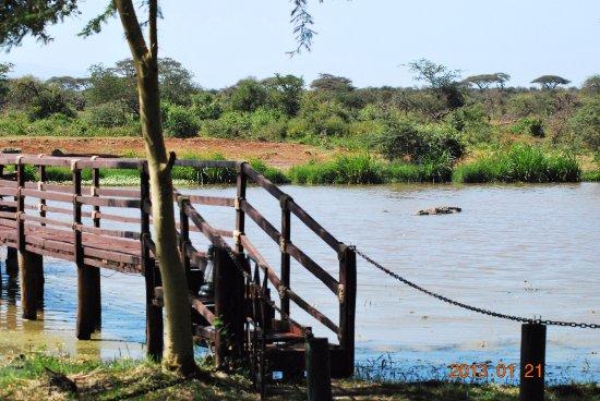 Voyager Ziwani, Tsavo West: Der Steg an See mit 4 meter Krokodil in der Mitte