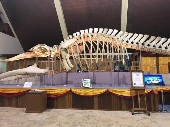 Sabah State Museum : photo2.jpg