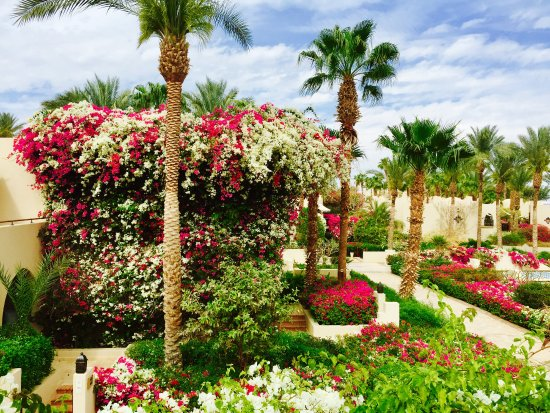 Four Seasons Resort Sharm El Sheikh: Garten