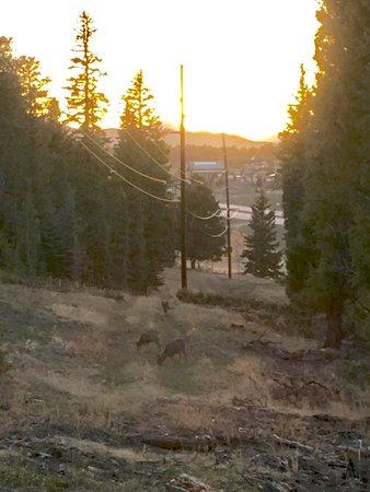 Conifer, Colorado: Elk just off the trail