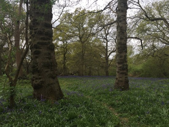 Hillhouse Wood: photo5.jpg
