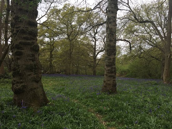 Hillhouse Wood: photo6.jpg