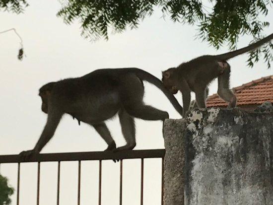 Kanadukathan, India: photo2.jpg