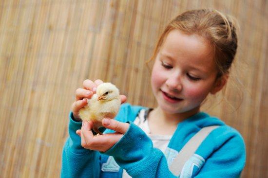 meet chicks