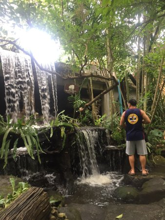 Пхе, Таиланд: Nice to walk around and explore food animals jungle park a must when visiting Rayong ban Phe Sua
