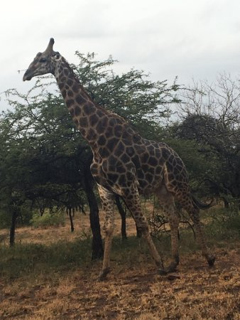 Mkuze Game Reserve, Zuid-Afrika: Nhlonhlela Bush Camp April 2017