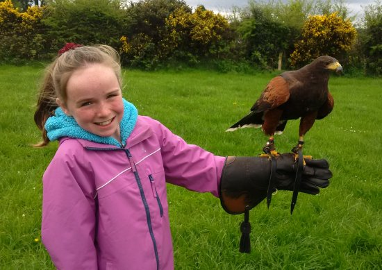 Kilmacthomas, Ireland: young person (10yrs old) comfortable flying the hawk