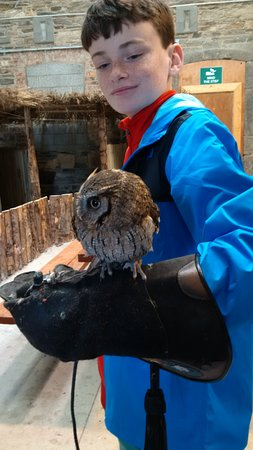 Kilmacthomas, Ireland: pre-teen with an owl