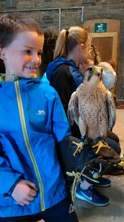 Kilmacthomas, Ireland: younger child with a falcon in the barn