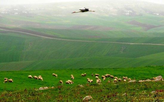 Nefza, تونس: Borj Lella