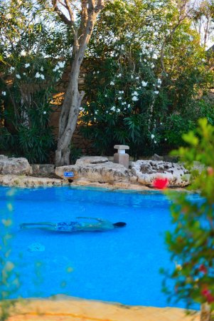 Hotel Ta' Cenc : HEATED POOL @ WELLNESS SPA