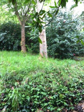 Jardines de la fonte baixa is it worth visiting see what for Jardines de la fonte baixa