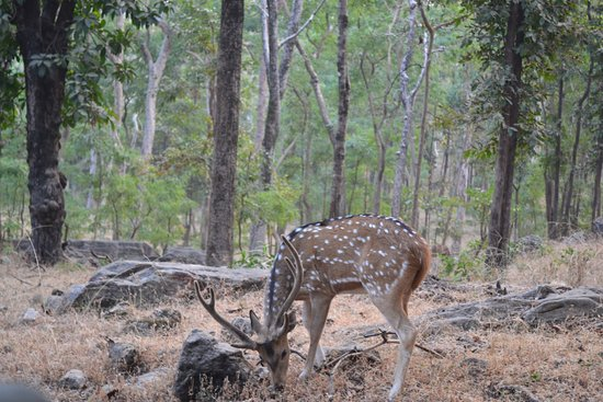 Baghvan Taj Wilderness Lodge: In the midst of forest