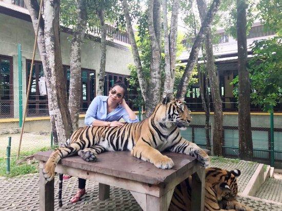 Chalong, Thailand: #TigerKingdom #PaweenaJctransportphuket #joejctransportphuket #citytour