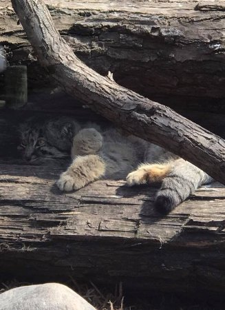 @ Red River Zoo in April