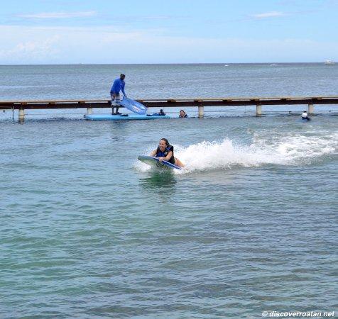 Coxen Hole, Honduras: Roatan Dolphin Action Swim