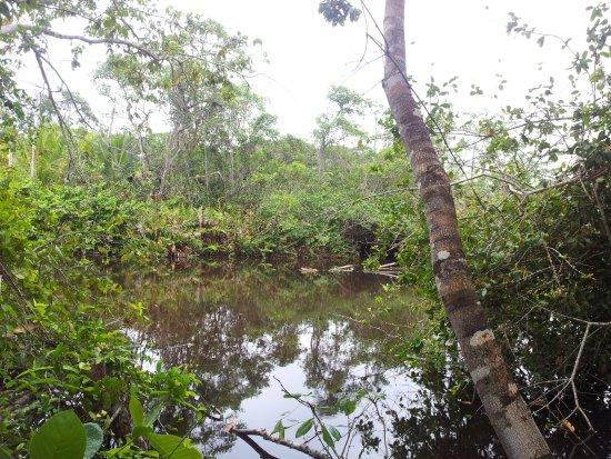 Cahuita ภาพ