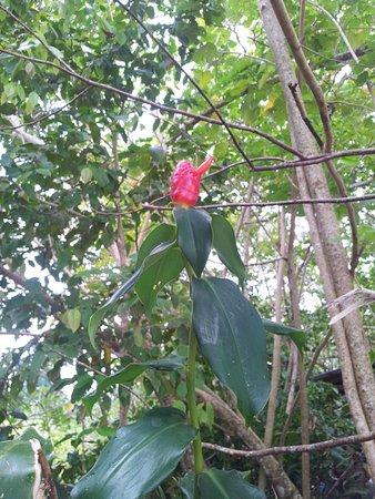 Imagen de Cahuita