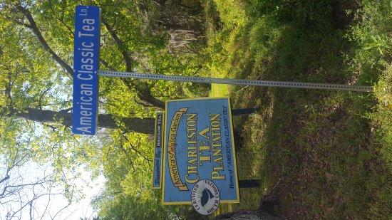 Charleston Tea Plantation: 20170414_103137_large.jpg