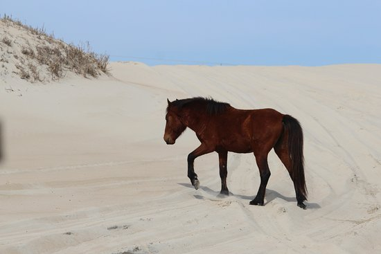 Picture Of Wild Horse Adventure Tours
