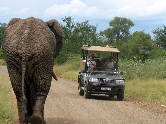 Marloth Park, South Africa: Kobus with Big Tuskers