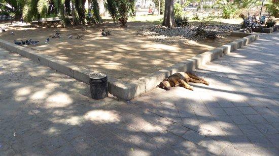 Parque Juarez  El Llano : Quiet day at the park