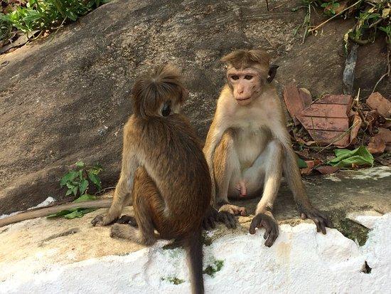 Kandy Guest House: photo0.jpg