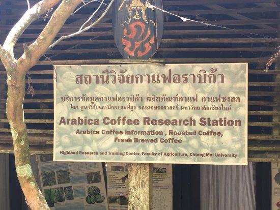 plantation de caf photo de khun chang khian chiang mai. Black Bedroom Furniture Sets. Home Design Ideas
