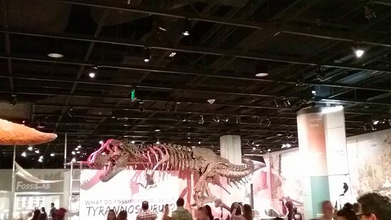 A review of the bollywood exhibit in the smithsonian museum of natural history