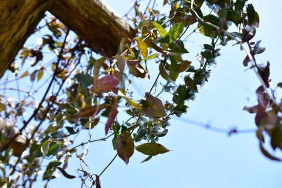 Franklin, TN: Garden pergola