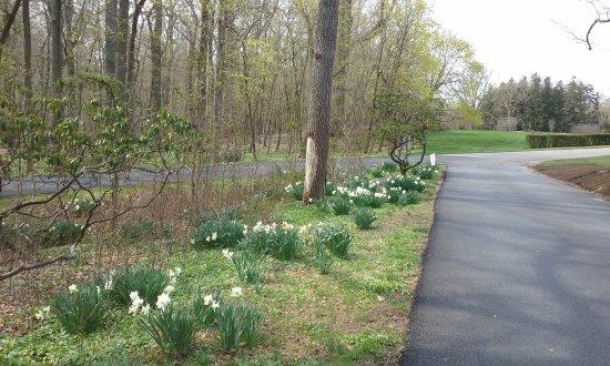 Wilmington, DE: Daffidols - Springtime at Nemours