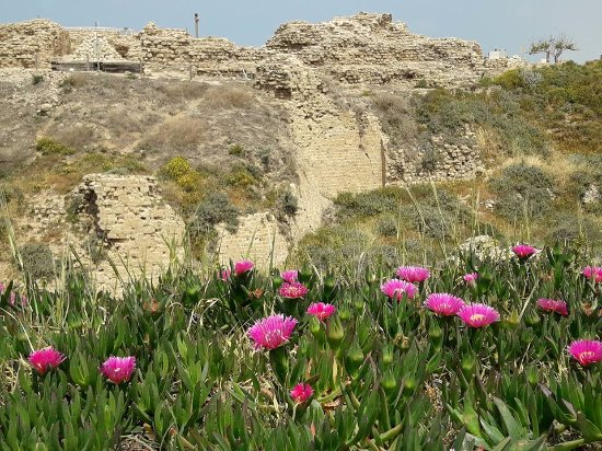 Apollonia National Park: Flowers bloom in full color on the background of the ancient crusader fort, taken April 2017.