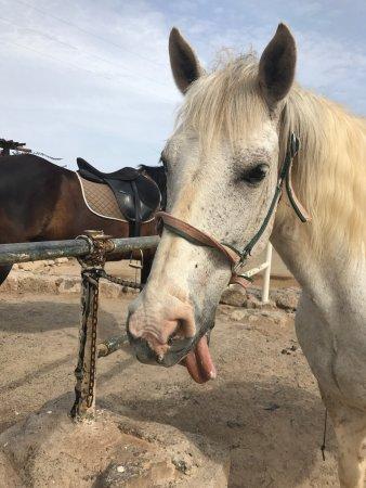 Horse Riding Adventures in Tenerife: photo0.jpg