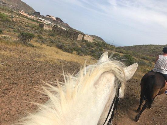 Horse Riding Adventures in Tenerife: photo2.jpg