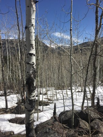 White River National Forest: Cross-Creek Trail Views