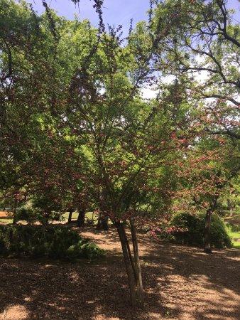 เยานต์วิลล์, แคลิฟอร์เนีย: photo5.jpg