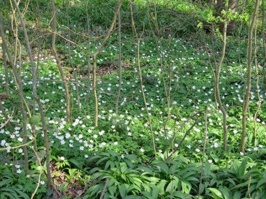 Ladies Spring Wood: A general view