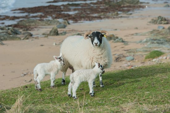 Port Ellen, UK: Traigh Cottage grass cutters