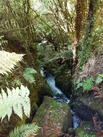 Buried Village of Te Wairoa: Track along the creek
