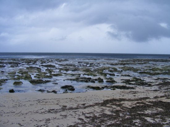 Kikambala, Kenia: A lot of coral and seaweed - a beauty all it's own.