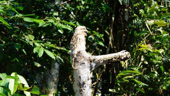 Siona Lodge: Bird!