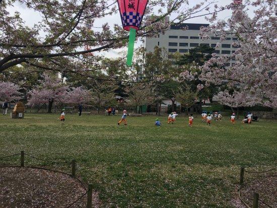 Tamamo Park: photo0.jpg