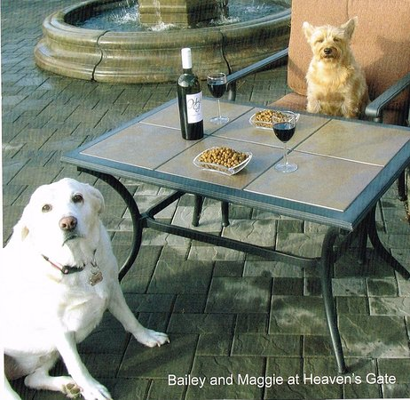 Summerland, Canada: Winery pups Maggie & Bailey