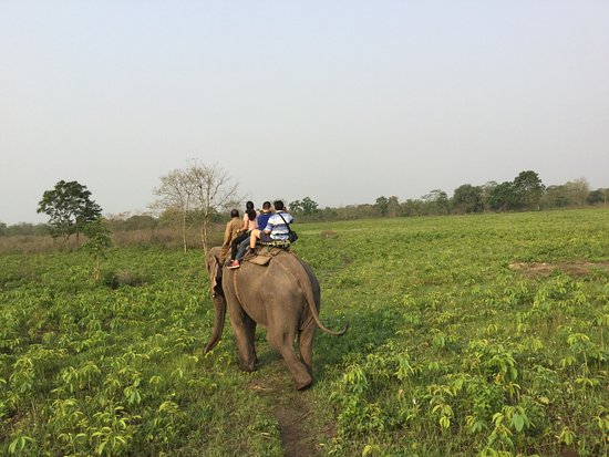 Manas National Park, India: photo0.jpg