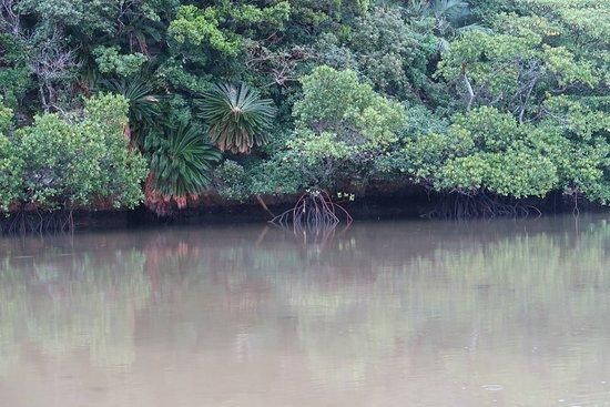 Foto de Miyara River Hirugi Grove