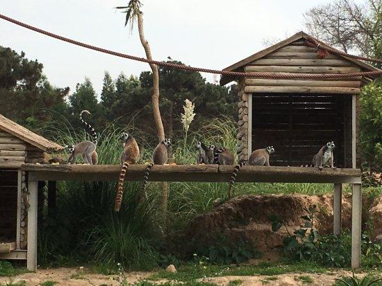 Jardin zoologique national de rabat photo de jardin for Jardin zoologique