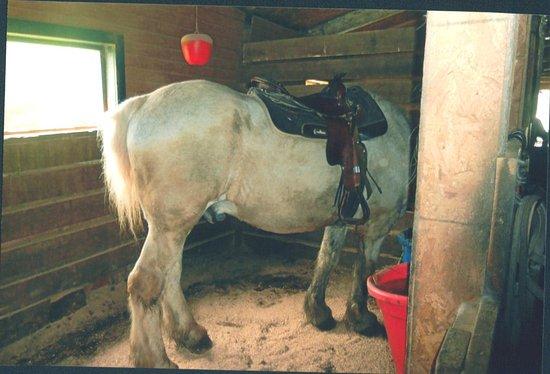 Sarah's Pony Rides