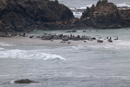 Cape Arago State Park : This shot of sea lions was taken on the road to the Cape parking lot